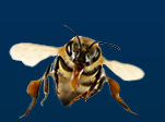 $30 Off Bee Hive Removal!