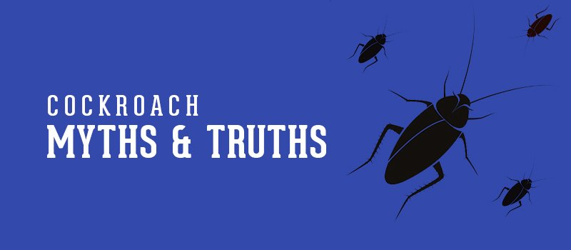 myth and truth about cockroach
