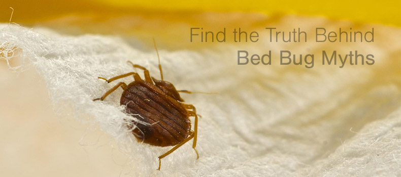 Find the truth behind bed bug myths