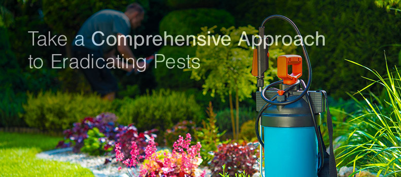 Take a Comprehensive Approach to Eradicating Pests